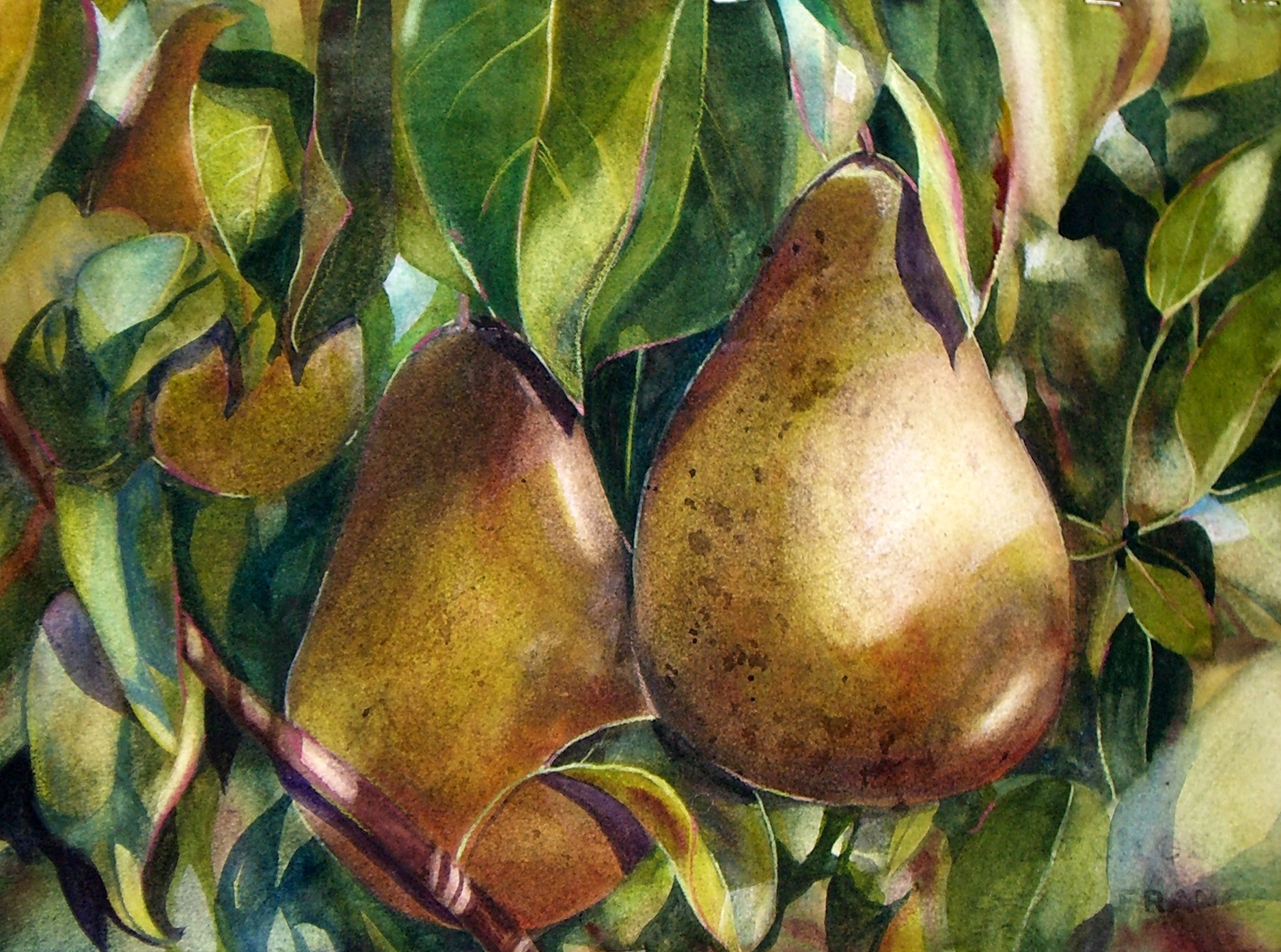 Pears in Shadow